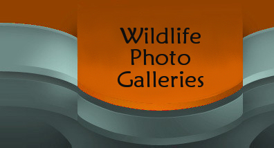 Wildlife Photos